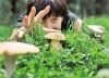 Що треба знати про гриби