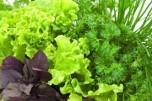 Про можливу  небезпеку ранньої рослинної продукції