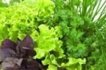 Про  ранню рослинну продукцію та нітрати
